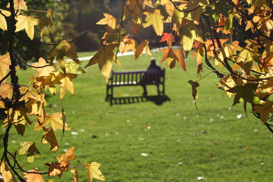 Parkinson's: Man on a park bench with autumn trees