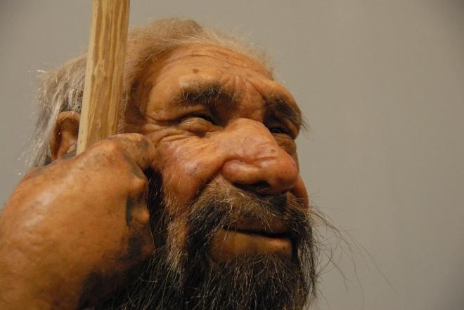 Neanderthal man reconstruction