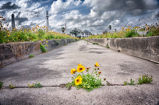 Weeds grow on a concrete pathway in a cemetery in Galveston, Texas