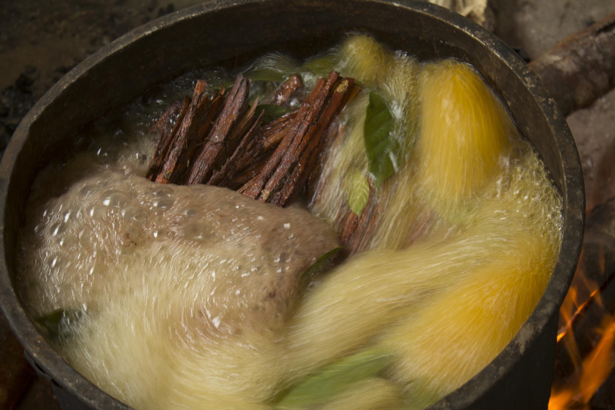 ayahuascaLarge